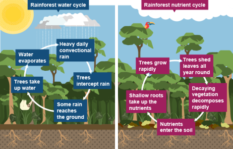 Nutrient Cycle in Nature